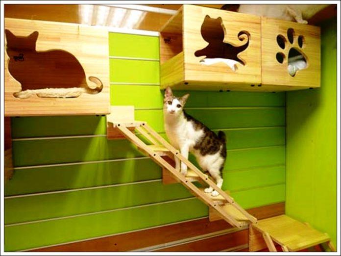 kedi parkuru,kedi yatağı,kedi odası dekorasyonu